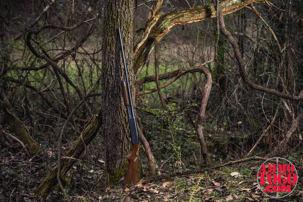 a photo of a 16 gauge shotgun against a tree outdoors
