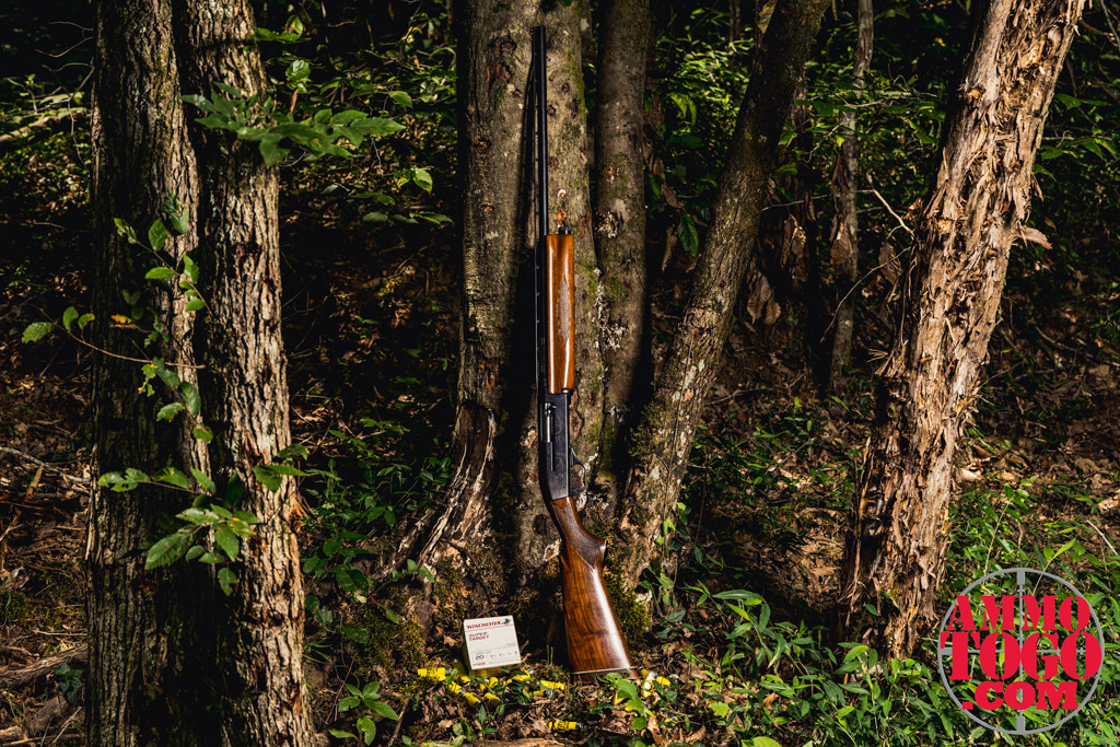 photo of a 20 gauge shotgun leaning against a tree