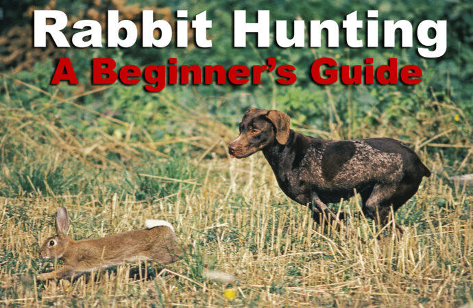 Rabbit Hunting – The Basics for a Great Hunt
