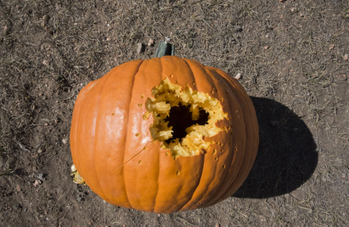 Pumpkin shot with steel shotgun ammo