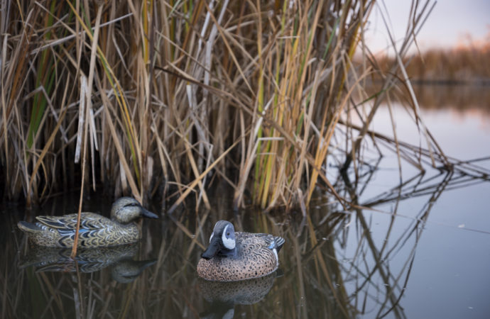 Two blue winged teal duck decoys