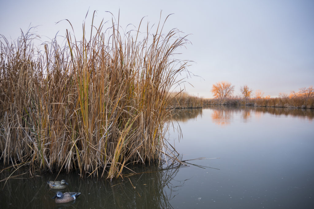 decoys in a marshy area