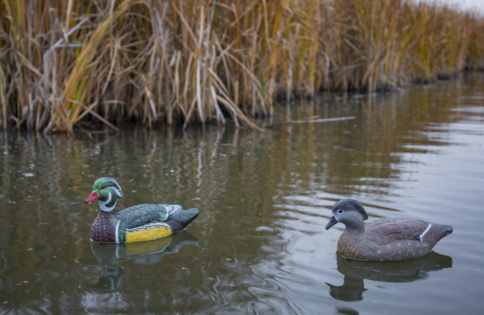 A wood duck drake and hen decoy in water