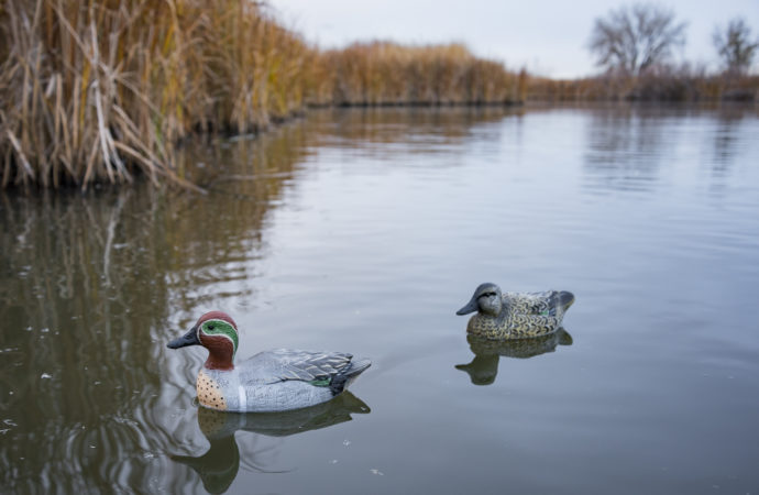 A male and female teal duck decoys