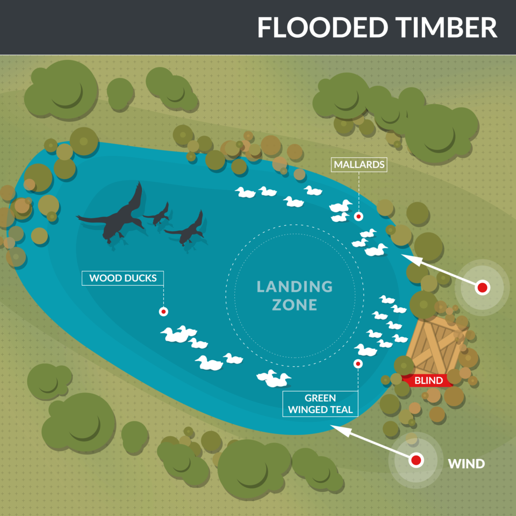Where to place your decoys when hunting in a flooded timber habitat